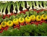 groentenkwekerij